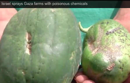 Israel sprays Gaza farms with poisonous chemicals