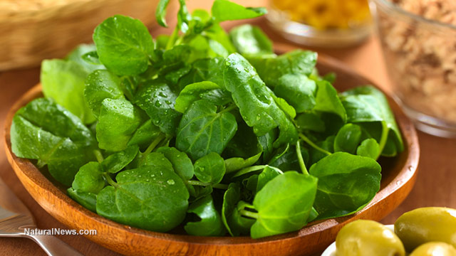 Watercress-In-Bowl