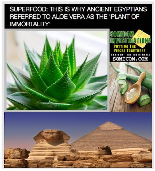 Aloe Vera As The Plant Of Immortality