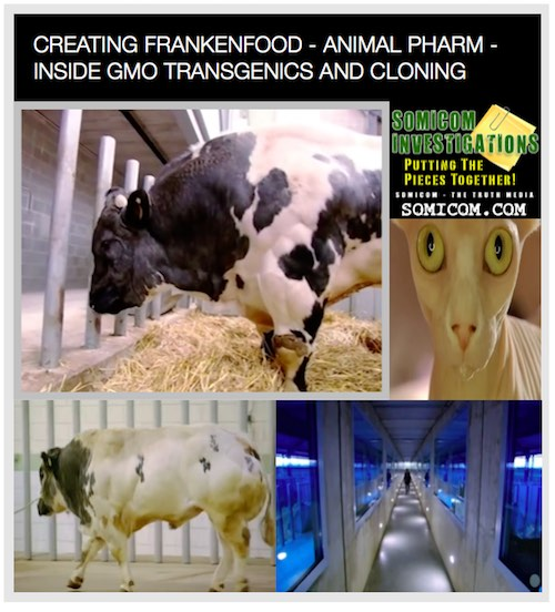 CREATING FRANKENFOOD - ANIMAL PHARM - INSIDE GMO TRANSGENICS AND CLONING