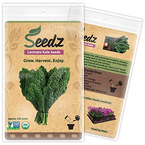 Certified Organic Seeds Approx 550 Lacinato Kale